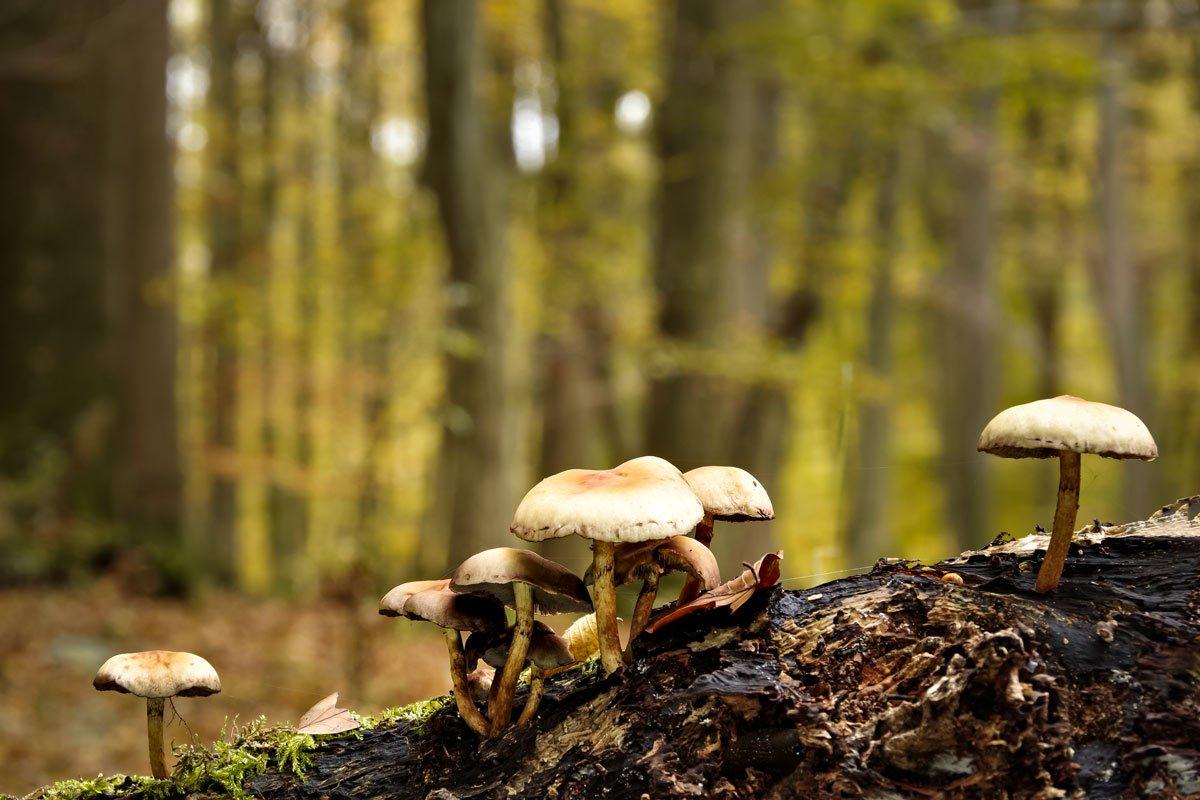 Bild 4: Im Herbstwald, 88 mm (APS-C), f 11, 0,6 sec., ISO 100